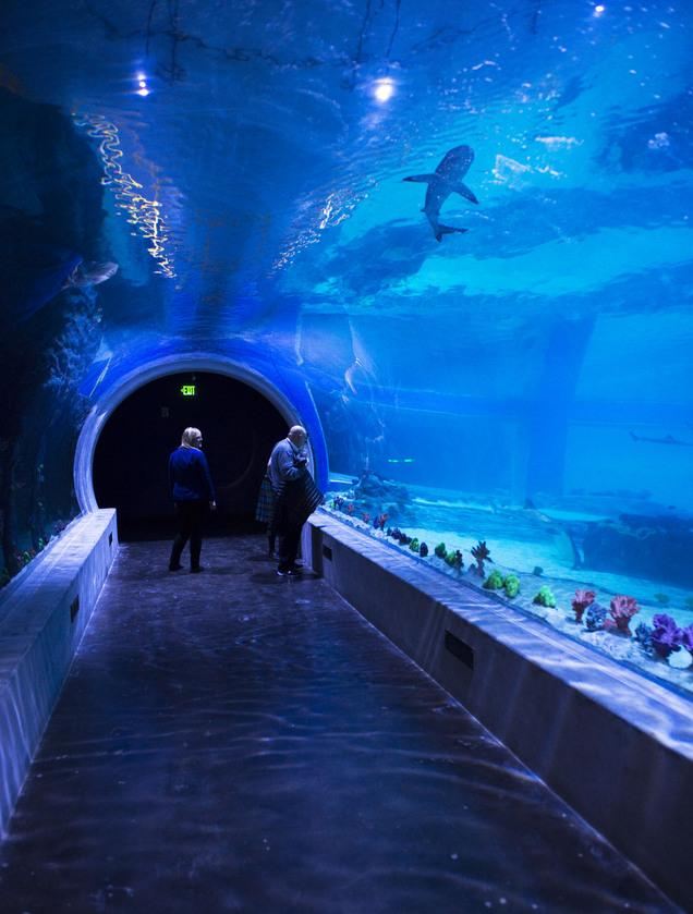 sharks are moving to their new living planet aquarium tank. Black Bedroom Furniture Sets. Home Design Ideas