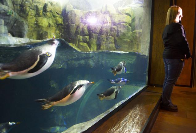 Sharks Are Moving To Their New Living Planet Aquarium Tank