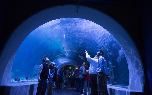 Aquarium Ogden Utah