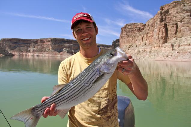 lake powell fishing report stripers have moved up to big