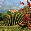 My Great Big Italian Wine Adventure